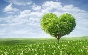 summer tree 7021913