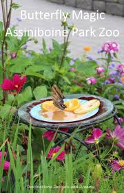 butterfly magic at assiniboine park zoo destinations detours and