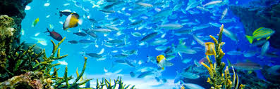 sunshine aquarium japan national tourism organization