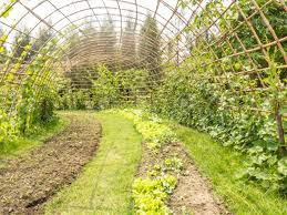 rolls of vegetable garden and bamboo tunnel for climbing plant