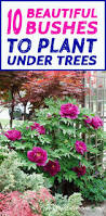 10 Perennials That Thrive In by Shade Loving Shrubs 10 Beautiful Bushes To Plant Under Trees