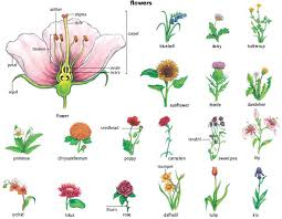 Part Of Flowers - flower 1 noun definition pictures pronunciation and usage
