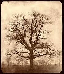 talbot s correspondence oak tree in winter