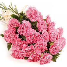 carnation bouquet send 12 pink carnations bouquet online to ahmedabad