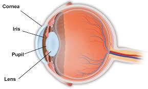 Picture Of Eye Anatomy Benign Prostatic Hypertophy Bph And Eye Surgery South Bay