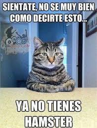 Funny Spanish Meme - funny love memes in spanish image memes at relatably com