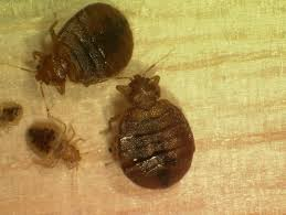 Bed Bugs In Ohio Bed Bugs And Schools Managing Pests In Schools Us Epa