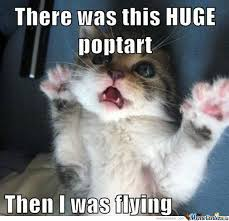 Meme Kitty - dreaming kitty by bozo meme center