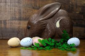 s chocolate bunnies australia s easter bunny the eared greater bilby