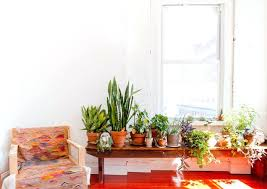 inspiring plant for living room eclectic by live plants in bedroom