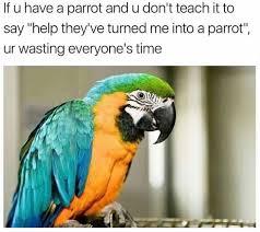 Parrot Meme - if you have a parrot meme