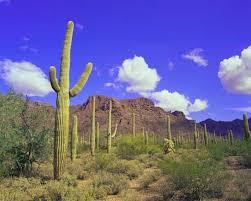Arizona vegetaion images Arizona history geography state united states jpg