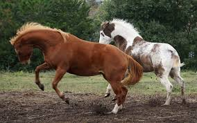 Used Horse Trailers For Sale In San Antonio Texas Home Habitat For Horses