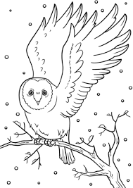 winter owl coloring page free printable coloring pages