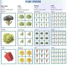 planting a vegetable garden spacing plants the garden inspirations