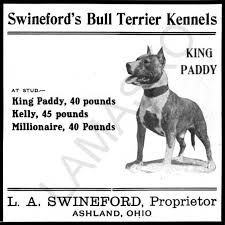 american pitbull terrier a legacy in gameness pal the wonder dog pitpedia