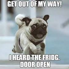Fridge Meme - dog heard the fridge door open what breed is it