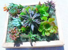 succulent living wall art vertical succulent planter succulent