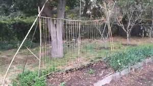 snap pea and berry trellis ideas and green manuring fava beans