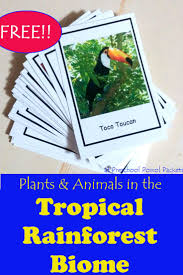 5 Dominant Plants In The Tropical Rainforest 750 Best Science Habitats Ecosystems Images On Pinterest Life