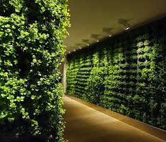 Interior Plant Wall 67 Best Green Wall Images On Pinterest Vertical Gardens