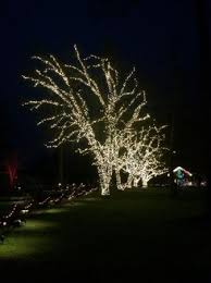 white lights in trees picture of the butchart gardens central
