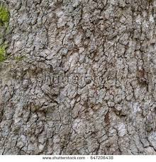 wood tree stock images royalty free images vectors