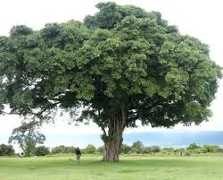 has sprung hug a tree better yet plant one the walking