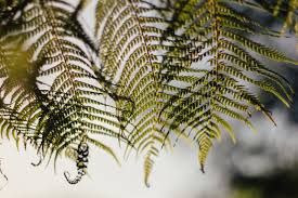 Free Picture Leaf Nature Fern Free Images Tree Nature Branch Leaf Flower Foliage Botany