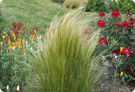 companion plants for ornamental grasses diane s flower seeds