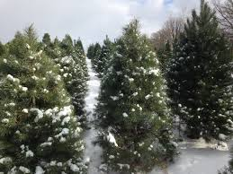 visit the fisher tree farm and tree lot fisher christmas trees