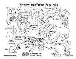 rainforest coloring pages ppinews co