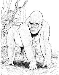 splat the cat coloring pages inspiring gorilla coloring pages for kids book 8758 unknown