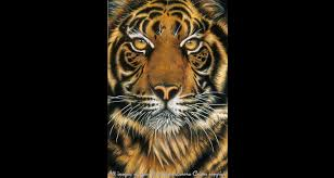 realistic drawing painting canadian artist lenora cairns tiger pencil crayon drawing artist painted wall murals lenora cairns hot graphics studios image copyright