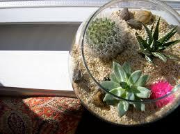 diy cactus terrarium u2014 crafthubs