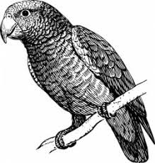 parrot coloring pages 106 best parrot coloring pages images on pinterest drawings