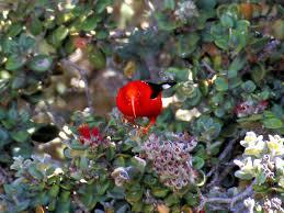 native plants hawaii native hawaiian birds live