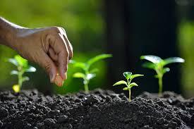 gardening 101 u2013 san diego seed company