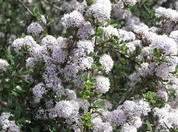 native american plants native american plants used for medicine magickalideas com