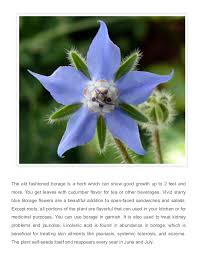 edible blue flowers 3 beautiful edible flowers you can grow at home