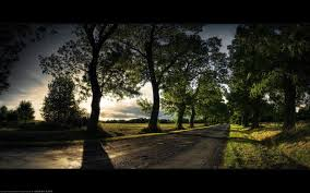 sunset alone wallpapers trees path alone green road sunset shadow landscape