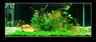 Aquascaping Plants Easy Life Aga Aquascaping Easy Life