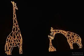 Zoo Lights Phoenix Air And Space Com Phoenix Zoo Lights December 16 2013