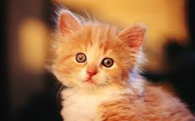 cats for free hd cute baby wallpapers download cat pics litle pups