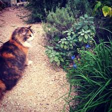 buchanans native plants gardening with pets 5 plants to avoid