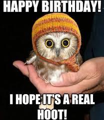 Happy Birthday Owl Meme - birthday hoot happy birthday meme pinterest happy birthday