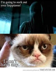 Scared Cat Meme - not scared of dementors cats grumpy cat pinterest