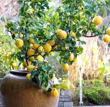 Fruit Garden Ideas 14 Inspiring Fruit Garden Ideas Image Design Qatada