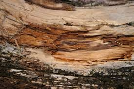 cedar wood grain tracie skarbo foundmyself