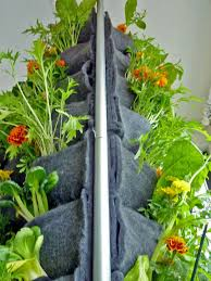 plants on walls aquaponic vertical vegetable garden